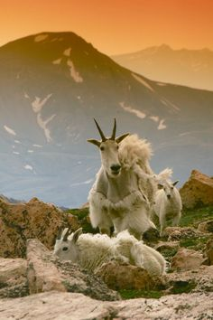 Incredible Wildlife Experience on top of Mt. Evans, Colorado Photography #Colorado