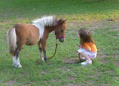 mini horse- Isaiah needs one Miniature Ponies, Horses And Dogs, Mini Horses, Cute Ponies, Paws And Claws, Horse World, Horse Pictures, Horse Photography, Horse Love