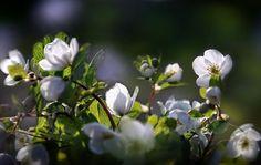 Fotky, fotografi, fotoblogy - Flog.sk