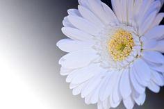 New free stock photo of flower macro bloom
