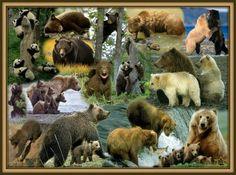 My Bear Den https://plus.google.com/u/0/collection/I4gTh