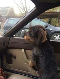 De copiloto