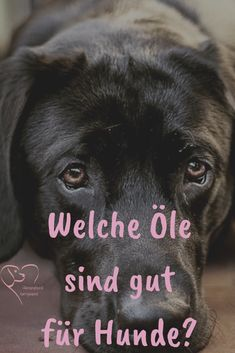 Ölsorten die für Hunde gesund sind Which oils supply the most essential fatty acids, Omega Omega 6 and vitamins our dogs need and how to dose them properly? Omega 3, Cool Watches, Watches For Men, Tea Tray, Essential Fatty Acids, Goldendoodle, Happy Dogs, Dog Walking, Bellisima