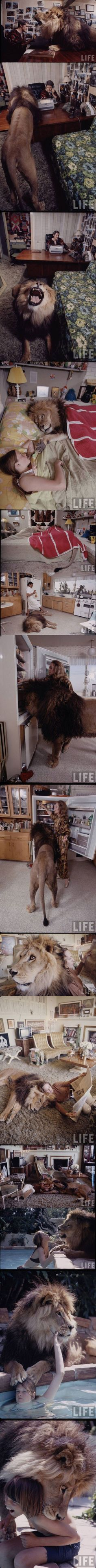 and then he bit their faces off, because keeping a lion in your house is a really terrible idea. but it looks awesome.