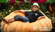 6pcs/lot venta caliente gigante americano semillas de calabaza semillasdehortalizas semillas de flor bonsái de cuidado de la salud de bricolaje para el hogar y jardín a++