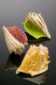 Hand blown glass shells! i just love hand blown glass art. so cool
