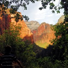 Zion National Park, a view through the trees to sunlight cliffs. Vacation Trips, Vacation Spots, Vacations, Zion National Park, National Parks, The Places Youll Go, Places To See, Voyage Usa, Southwest Usa