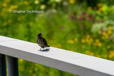 Birld on rail surrounded by flowers