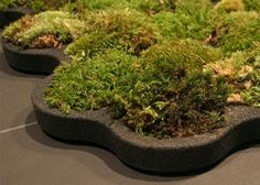 Die besten 25 moos badematten ideen auf pinterest for Badezimmerteppich design