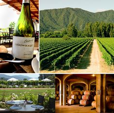 Taking A Day Trip Into Chilean Wine Country - Forbes Travel Guide