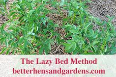 Growing potatoes in the backyard garden. Here are over 6 different ways you can plant potatoes in your backyard garden. Herb Garden, Garden Plants, Planting Potatoes, Types Of Herbs, Lemon Balm, Passion Flower, How To Make Tea, Growing Herbs, Medicinal Herbs