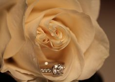 white rose proposal