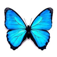 Beautiful 3D blue butterfly.