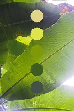 Bright green color palette inspired by banana leaves. Photo taken in Garden of Eden Arboretum on Maui Hawaii. Green Color Pallete, Green Color Schemes, Green Palette, Green Colors, Bright Green, Palette Art, Nature Color Palette, Modern Color Palette, Color Palettes