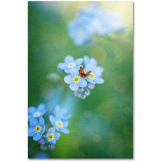 Trademark Fine Art Forget-Me-Not Canvas Art by Philippe Sainte-Laudy, Size: 16 x 24, Green