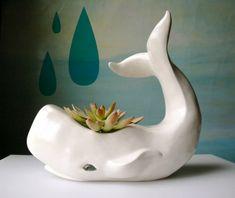 Water spout succulent :)  -- Adorable!