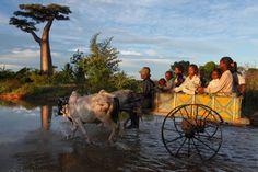 Un fermier conduit ses enfants vers les rizières de la famille, près de Morondava, le long d'une piste inondée. Les Malgaches essaient de survivre au mieux sur un terrain incertain.