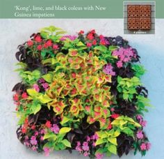 "Living Wall Planters can be hung in groups of four or more! These planters have  ""Kong"", lime and black coleus with New Guinea impatients. So pretty! Available from @Kinsman Garden."