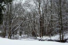 """http://pinterest.com/pin/create/button/?url=http://fineartamerica.com/featured/its-a-beautiful-winter-kay-novy.html=http://fineartamerica.com/images-medium-5/its-a-beautiful-winter-kay-novy.jpg  """"A Beautiful Winter"""" by Kay Novy.  http://kay-novy.artistwebsites.com/featured/its-a-beautiful-winter-kay-novy.html"""