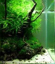 "2009 AGA Aquascaping Contest - Entry #58, ""Vert Bouquet"""
