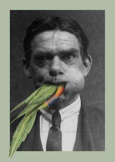 Parrot30 x 40 cm