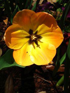 Yellow/Orange Flower By Kristine Euler
