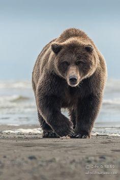 qualquer animal legal, irado, bonito ou insano que valha apena eu dar uma olhada