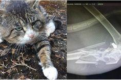 chat blessé par balle oregon