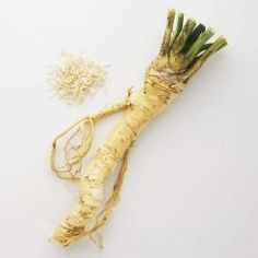 Horseradishes are perennial herbs with large, fleshy roots and course, rough-textured leaves. They are cultivated for their pungent, aromatic roots, which are used primarily as a food condiment. Growing Horseradish, Natural Home Remedies, Herbal Remedies, Health Remedies, Sinus Remedies, Healing Herbs, Medicinal Plants, Holistic Healing, Gastronomia