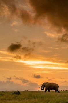 """Sundowner"" by Brendon Jennings"
