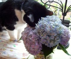 Toxic and Nontoxic plant list for cats.