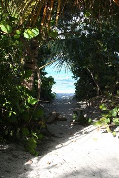 Anguilla. Love nature paths.