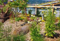 Flowers and logs in green roof garden - contemporary - Landscape - Seattle - The Watershed Company