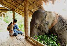 Gentle Giant-Elephant Sanctuary in Thailand!