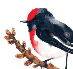 Red Capped Robin / Watercolor illustration by BarbaraSzepesiSzucs,