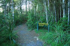 Bush Walk,NZ