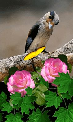 Beautiful Flowers Wallpapers, Beautiful Nature Wallpaper, Beautiful Gif, Beautiful Roses, Angel Pictures, Gif Pictures, Nature Pictures, Exotic Birds, Colorful Birds
