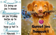 In a Perfect World. Weekend Fun, Happy Weekend, Happy Friday, Friday Wishes, Evening Greetings, Goeie More, Special Quotes, Perfect World, Afrikaans