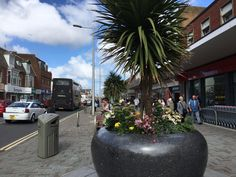 Shopping in Cleveleys town centre Seaside Towns, Days Out, Great Places, Centre, Places To Visit, Coast, Landscape, Nature, Plants