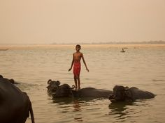 My favourite snap from a trip to Varanasi India last year: A boy and his water buffalo