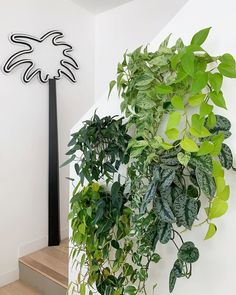 An update on my plant wall for - Modern House Plants Decor, Plant Decor, Hanging Plants, Indoor Plants, Marble Queen Pothos, Neon Pothos, Plants In Jars, Corner Plant, Front Garden Landscape