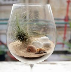Wine glass terrarium.  Sand, shells and an air plant.  Cute idea.  Would work in a fish bowl too.