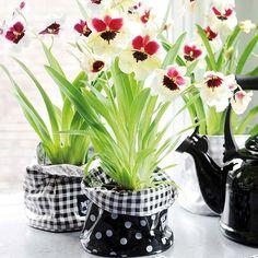 Ponemos flores en las tazas para crear un espacio - Macetas originales para plantas ...