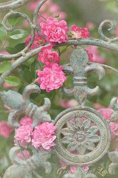 Garden Gate by zzzztime