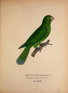 New species of birds from Brazil in the years 1817, 1820 by Spix, Johann Baptist von, 1781-1826; Martius, Karl Friedrich Philipp von, 1794-1868; Schmidt, Matthias, 1749-1823 Publisher: Monachii : Impensis editores Year: 1838 contributor: Smithsonian Libraries http://68.media.tumblr.com/1e807643b10880591ee304e1e820d526/tumblr_ogy7m7t81P1rub9fao6_1280.jpg