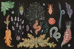 The Hidden World of Soil Under Our Feet - we are facing the sixth great extincti. - Biology and Nature - Plants Katie Scott, Organic Soil, Green Monsters, Plant Drawing, Nature Plants, Animal Species, Botany, Permaculture, Ny Times
