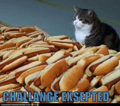 cat + lots of hot dogs = challenge accepted