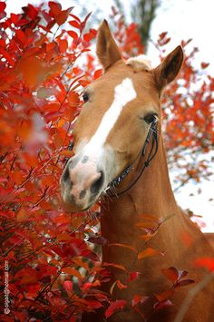 """Horse ... ** The PopDot Artist ** Please Join me on the Twitter @Alabama Byrd & Be my Friend on the FaceBook --> http://www.facebook.com/AlabamaBYRD ** BIG BYRD HUGS & SMILES & PRAYERS TO EVERYONE IN NEED EVERYWHERE ** ("""")< Chirp Chirp said THE BYRD http://www.facebook.com/AlabamaBYRD"""
