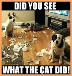 Did you see what the cat did?!?