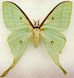 I just found out this is a moth, but I'll leave it on this board anyway since it's so lovely.